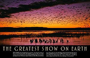 Greatest-show-opener.jpg