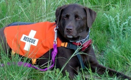 K9_search_and_rescue.jpg
