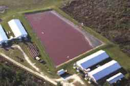 pig_farm_waste_lagoon.jpg