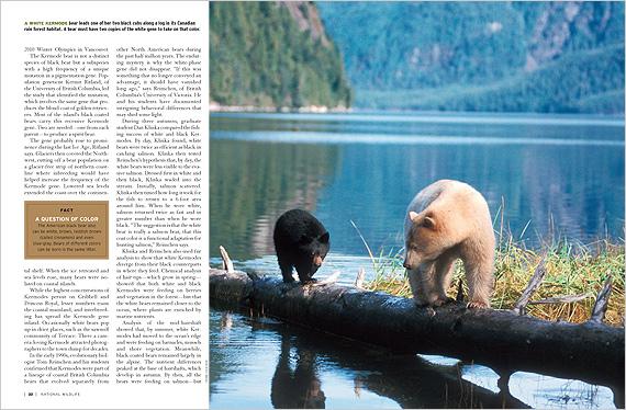 Kermode-Bears-FM10-2.ashx (1).jpg
